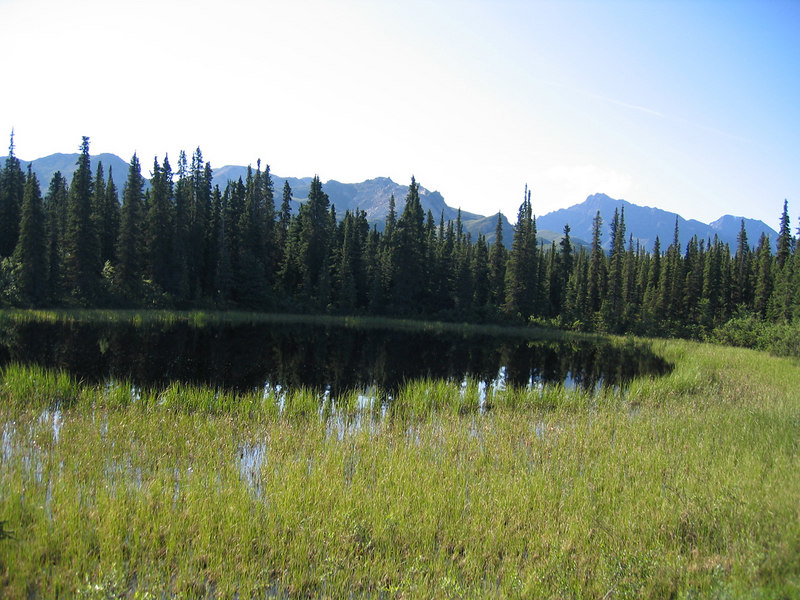 Pond by Teklanika River