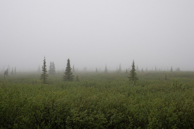 Mystical fog such as seen often in the area