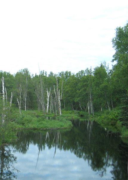 Trapper Creek area