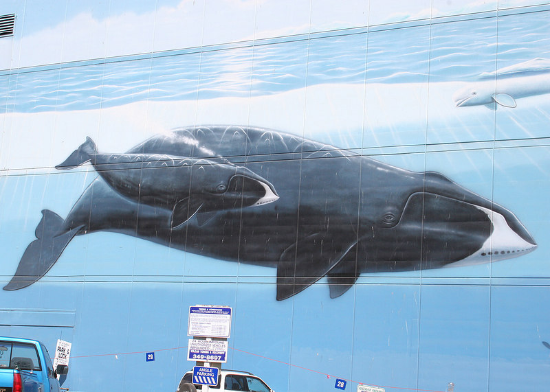 Mural of whale