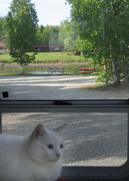 Moloko enjoying the view from our 5th wheel with the Chena River in the distance