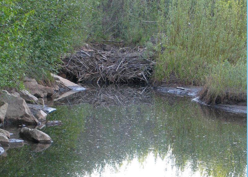 Beaver Lodge 48 miles from Fairbanks, AK
