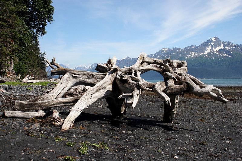 Driftwood along beach at Tonsina Point, Seward, AK