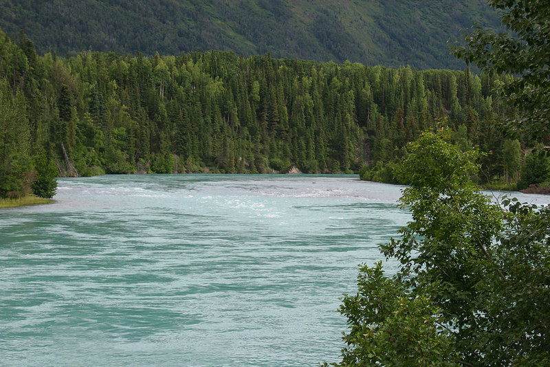 Kenai River about 50 miles from Kasilof, AK