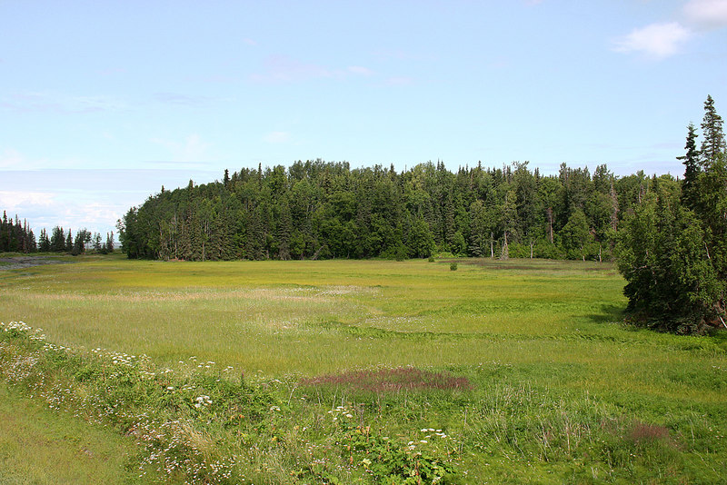 Meadow next to Swanson River in Captain Cook State Recreation Area, Kenai, AK