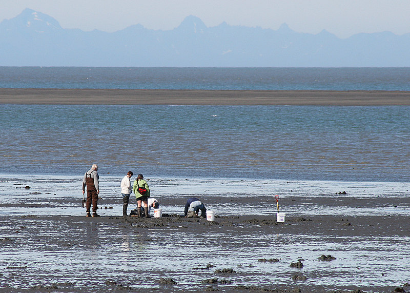 e in the brown waders with some of the other clammers at the beach at Ninilchik Village, AK
