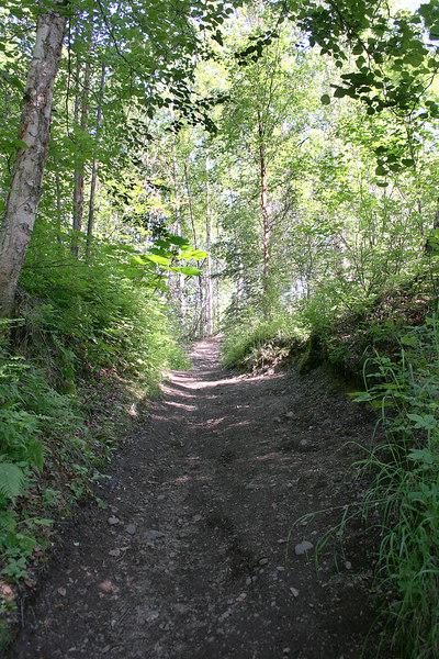 Trail to Thunderbird Falls