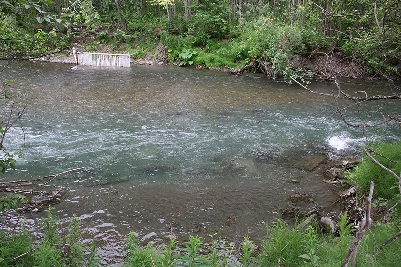 Look closely and you can see the outline of the salmon waiting in Ship Creek to spawn.  The salmon are lined up on each side of the turquoise portion of the water.