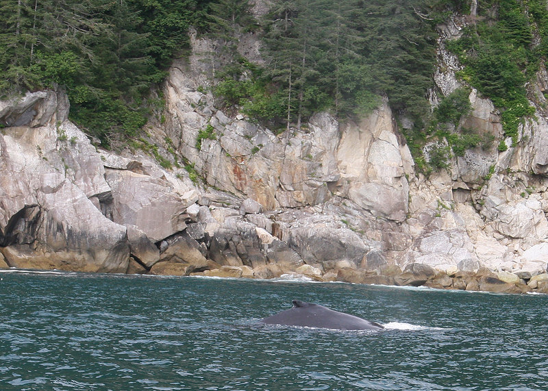 Whale in Pony Cove