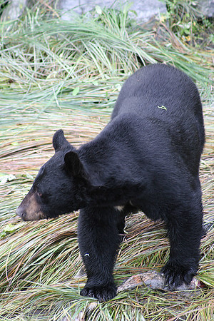 Our Great Alaska Adventure 5/19/06 - 9/10/06