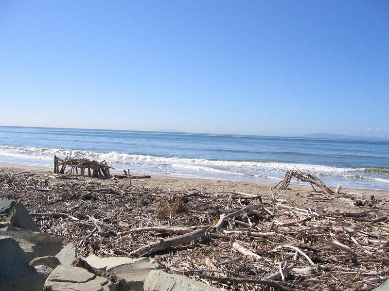 Driftwood along bike path in Ventura, CA