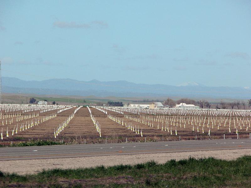 Field just north of Sacramento, CA