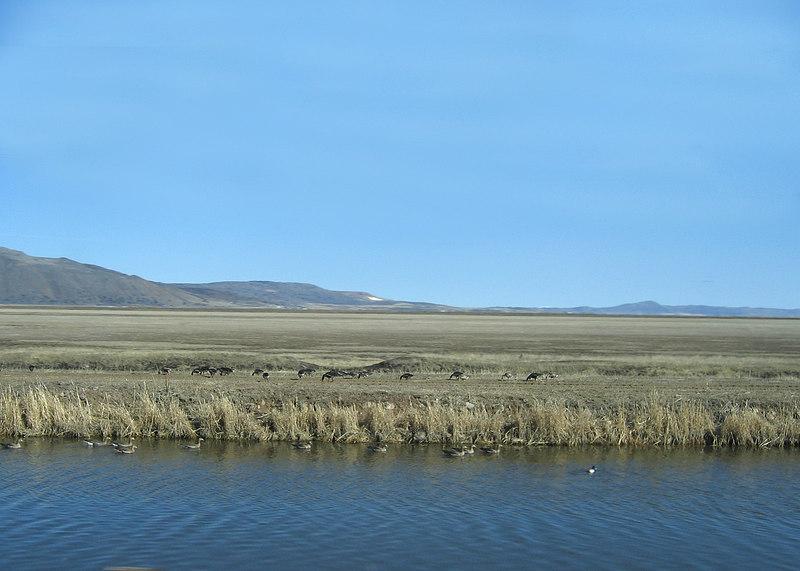Geese around the California/Oregon border