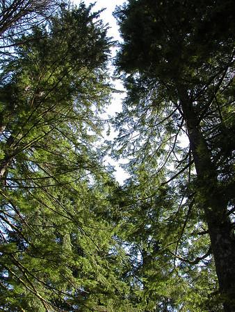 Mt. Hood, OR drive - 4/22/06