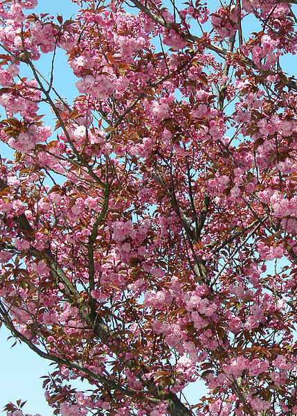 Blossoms in Sandy, OR