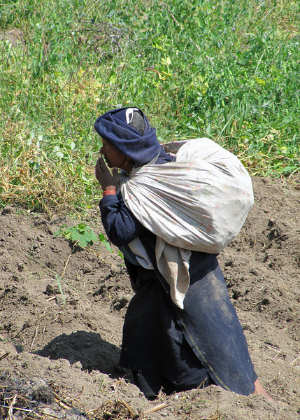 An indigenous woman working in the field