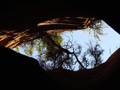 Looking straight up in Red Cave, June 14