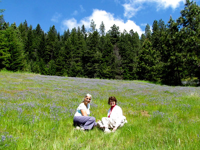 Big Meadow was in spectacular spring bloom.