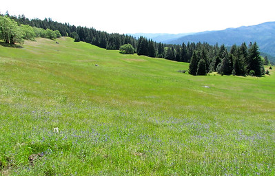 It really is a Big Meadow, fairly high up on the side of the ridge.
