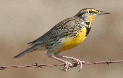 2006-11-25 Lets Go Birding