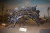 A Stegosaurus.