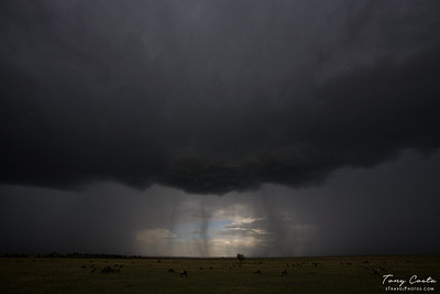 Storm over the Masai Mara