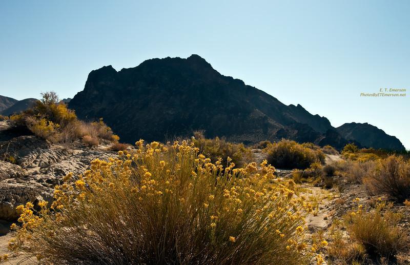 Black Rock Desert - Day 2