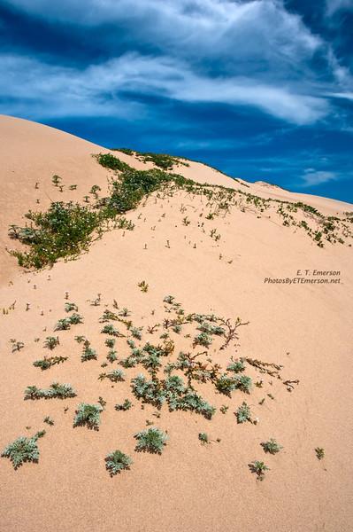 Guadalupe Nipomo Dunes Preserve