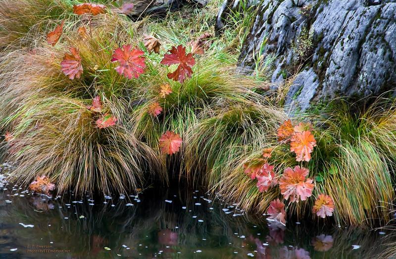 Plumas County Fall Color
