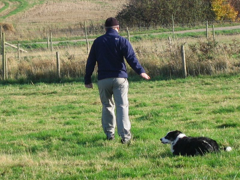 Nigel working on distance down/drop commans.