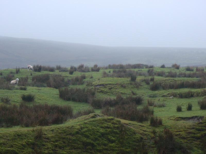 Foggy Moors