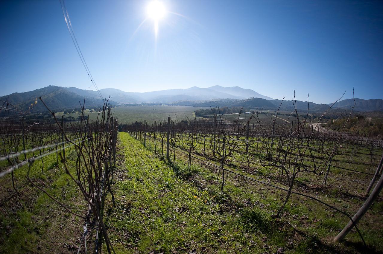 Matetic Vineyard