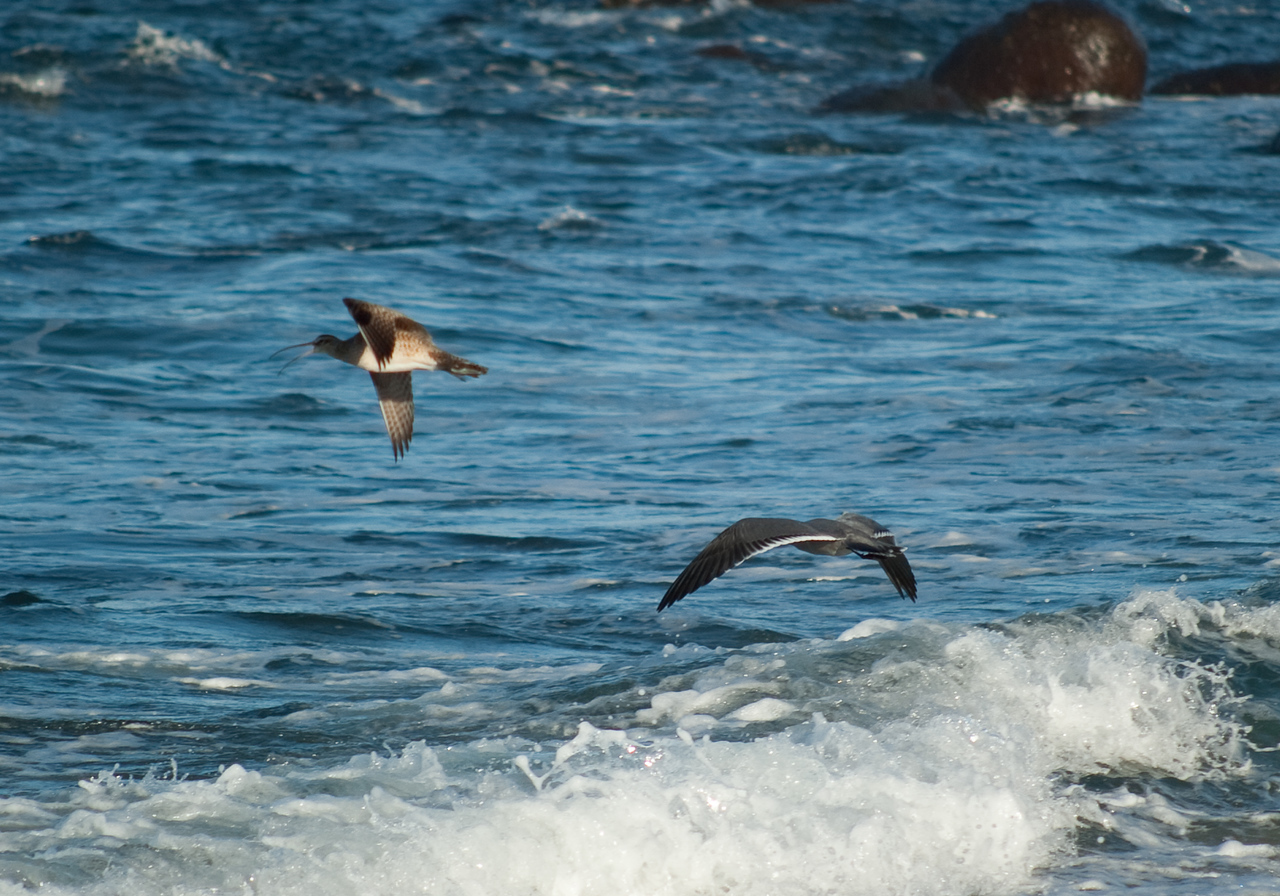 Bird-watching on the coast north of Valparaiso.