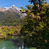 Hollyford River Vista