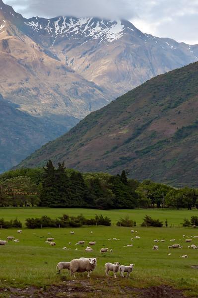 Makarora Pastures