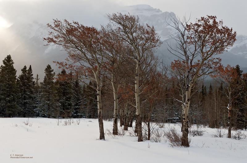 Wildhorse Creek Aspen