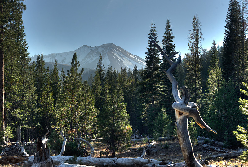 Many of the forests around Mt. Lassen seem to be relatively young, probably due to the fact that Mt. Lassen has erupted as recently as 1915.
