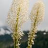 Mount Rainier NP Scenes