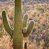 Saguaro National Park - West