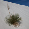 Life in the Desert<br /> White Sands National Monument, New Mexico, USA