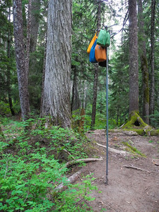 Food stuff sacks on bear pole