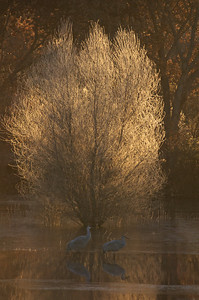Wintery morning light at the Bosque