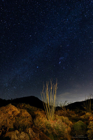 Night Sky in Plum Canyon