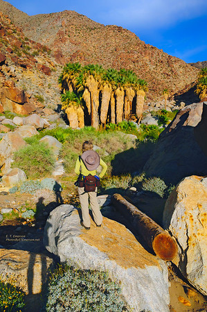 Hiking Borrego Palm Canyon Trail