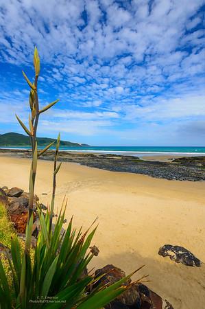 Northlands - Ahipara Beach