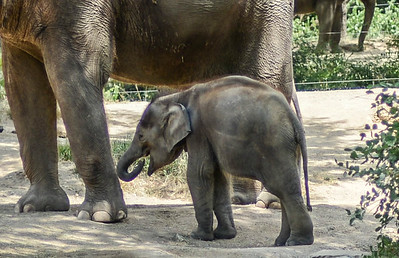 Baby anything's are cute! (St. Louis Zoo)