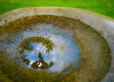 Focusing on water in a bird bath ... looks like an eye! (Bellevue Downtown Park)