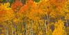 Aspen Color near Maroon Lake