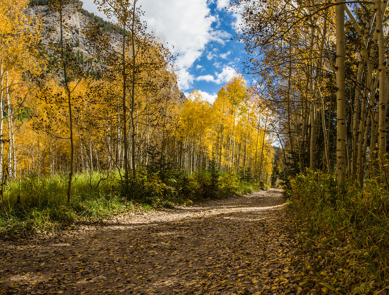 Aspen Lined Road outside Crystal Colorado