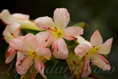 Lite Pink Flower